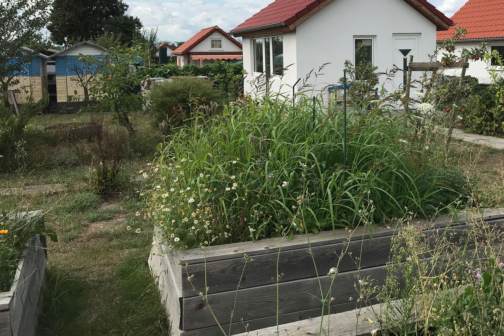 Pflanzbeet im Schulgarten der HCA Hitdorf