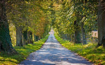 Grüne Meilen für die Umwelt sammeln